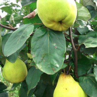 Bild zu:Sadne dobrote I Obst Leckereien
