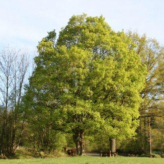 Bild zu:Von Bäumen und Menschen