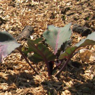 Bild zu:Kaj sadimo na vrt za zimo | Was wir für den Winter im Garten pflanzen