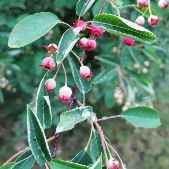 Bild zu:Slastni plodovi grmovnic I Köstliche Beerensträucher