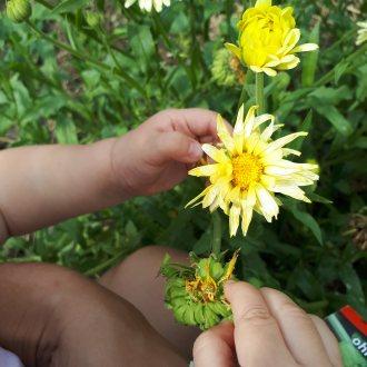 Bild zu:Vrtna pomočnica v avgustu