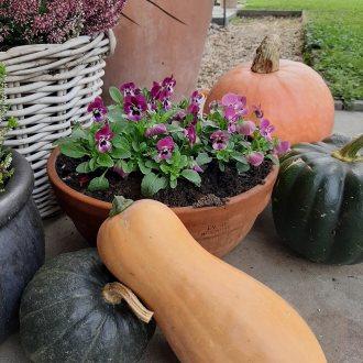 Bild zu:Vrtna pomočnica v oktobru