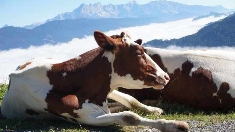 Bild zu: Milchgeschichten