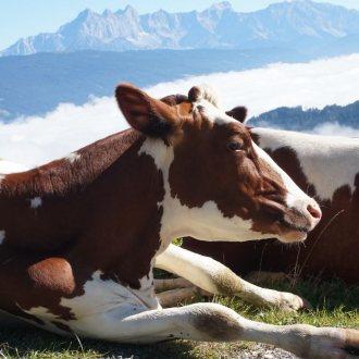 Bild zu:Milchgeschichten