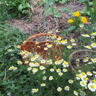 Bild zu:Vrtna pomočnica v juniju - v vročih dneh razmišljamo na zimo