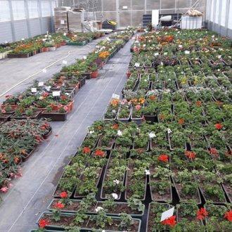 Bild zu:Gärtnern macht glücklich