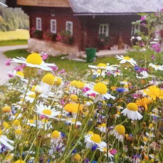 Bild zu:Konec uspešne cvetlične sezone v Soboti