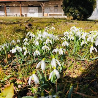 Bild zu:Pomladne teme I Frühlingsthemen